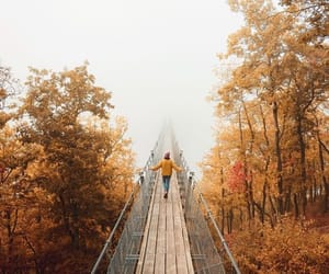 autumn, bridge, and forest image