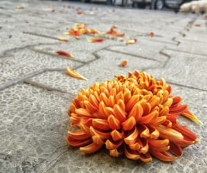aesthetic, perspective, and petals image
