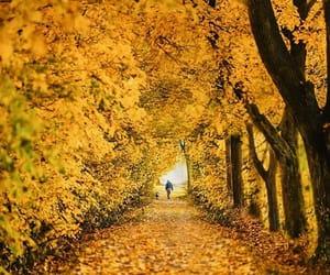 autumn, fall, and germany image