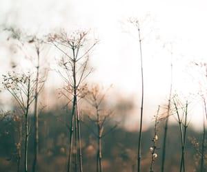 autumn, fall, and soft image
