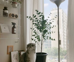 cat, room, and aesthetic image