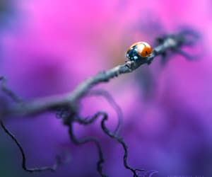 ladybird, luck, and macro image