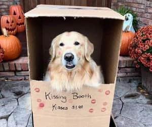 dog, kiss, and pretty image