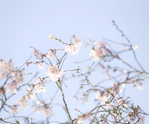 asian, cherry blossom, and insp image
