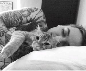 animals, cat, and the amity affliction image