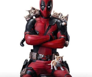 deadpool, cat, and kittens image