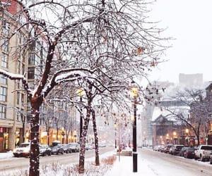 christmas, city, and nature image
