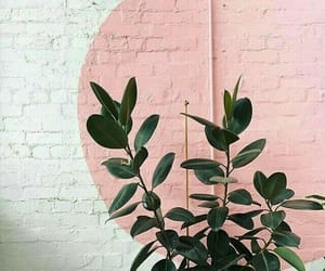 pink, plants, and white image
