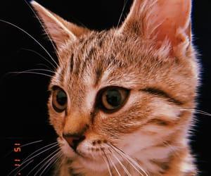 cats, mood, and huji image