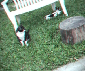 cat, green, and kawai image