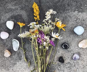 crystals, dried, and flowers image