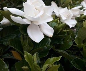 flower and jasmine image