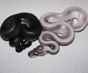 animal, snake, and white image