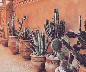 botanical, cacti, and cactus image