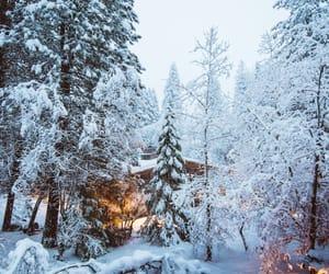 christmas, pine tree, and snow storm image