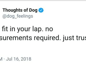 lap, trust me, and thoughts of a dog image