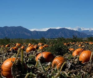 fall, patch, and harvest image