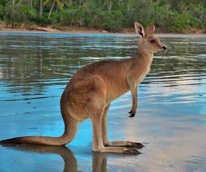 animals, cute, and australia image
