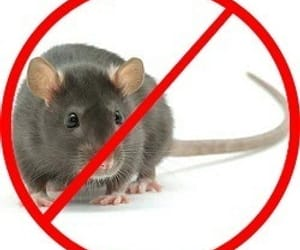pest control services, rodent control services, and rats control services image