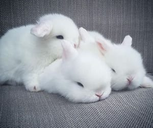 Floofy Pile Of Bunnies