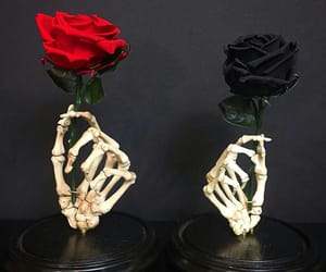 roses, skeletons, and skeleton image