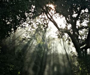 beams, light, and nature image