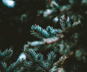 holiday, nature, and ornaments image