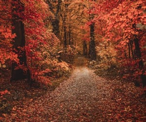 autumn and bosque image