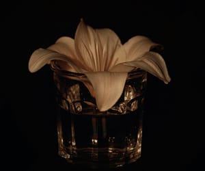 aesthetics, black, and flower image