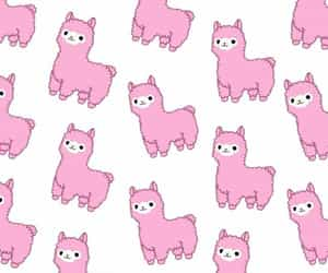 alpaca and pink image