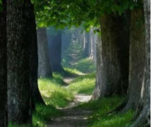 green, nature, and wood image