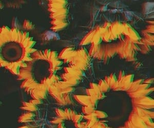 sunflowers, wallpaper, and lock screen image
