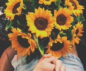 sunflower, couple, and flowers image