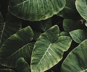 green, theme, and plants image