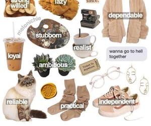 astrology, beige, and cat image