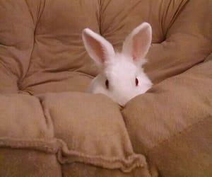adorable, sofa, and white rabbit image