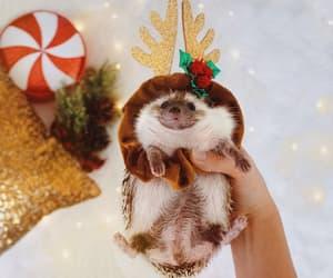animal, christmas, and hedgehog image