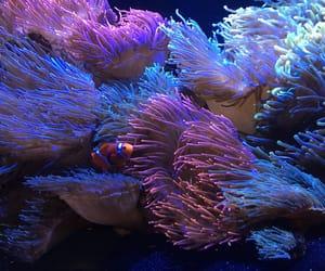 aesthetic, aquarium, and fish image