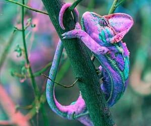 naturaleza, reptiles, and camaleon image