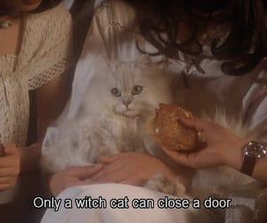 cat, grunge, and movie image