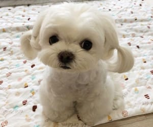 puppy, cute, and love image