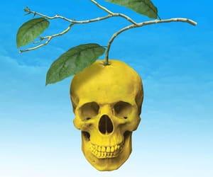 art, skulls, and yellow image