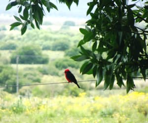 animal, animals, and countryside image