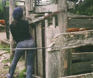countryside, cow, and farm image