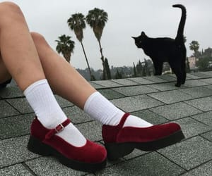 cat, red, and shoes image
