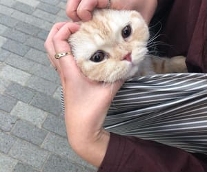 cats, kitten, and cute image