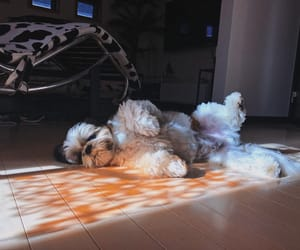 animals, dog, and fall image