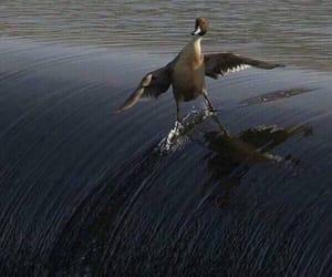 surfs up bird image