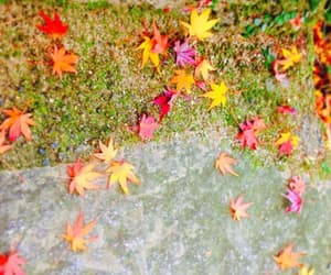 autumn, fall leaves, and fallen image