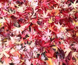 autumn, changes, and fall leaves image